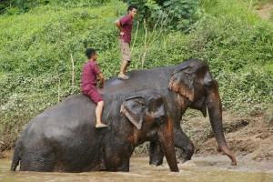 Laos-dowietnamu.pl-slon