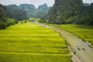 Rice Field In Tam Coc, Ninh Binh, Vietnam