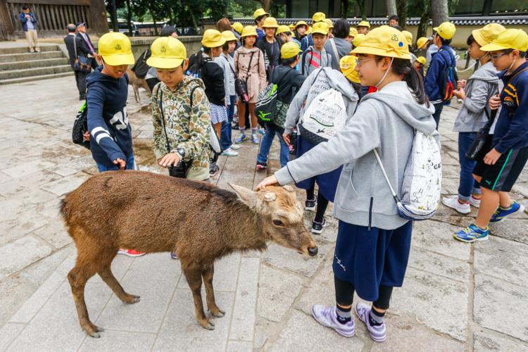Park Nara w Japonii
