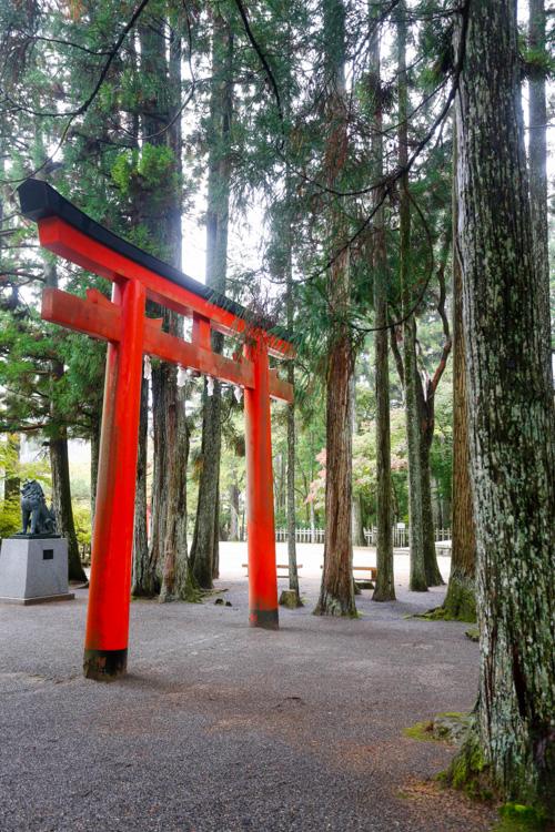 Brama Torii w Koyasan w Japonii