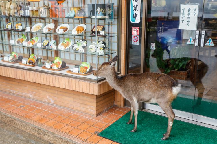 Miyajima w Japonii