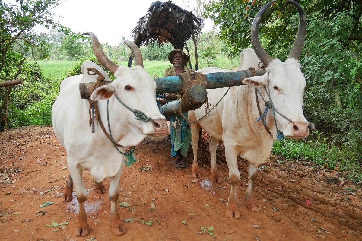 zwierzęta na Sri Lance