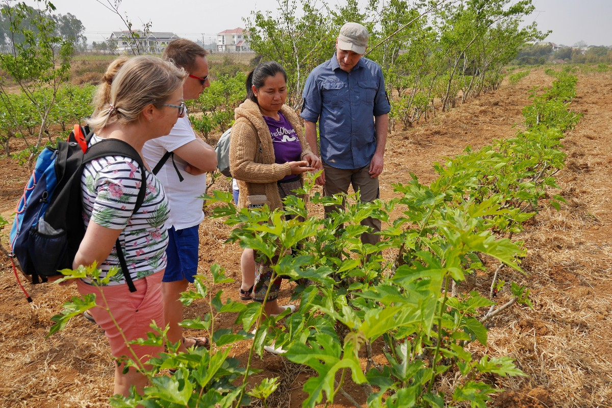 farma jedwabników w Phonsavan w Laosie