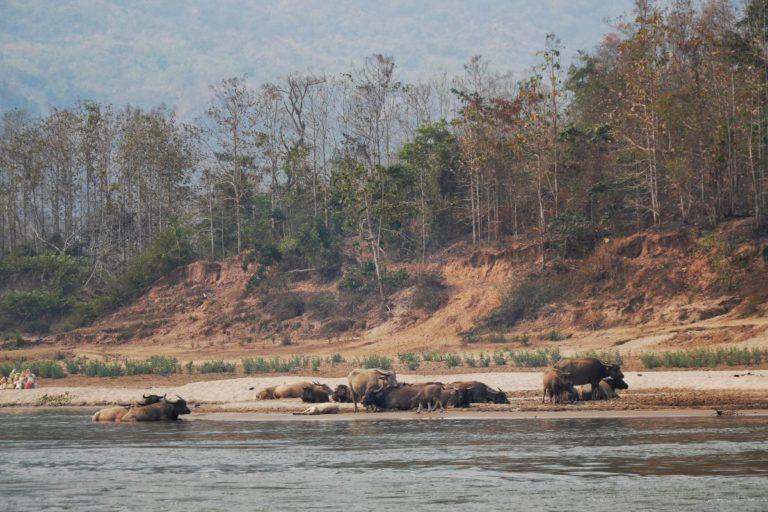 rzeka Mekong w Laosie
