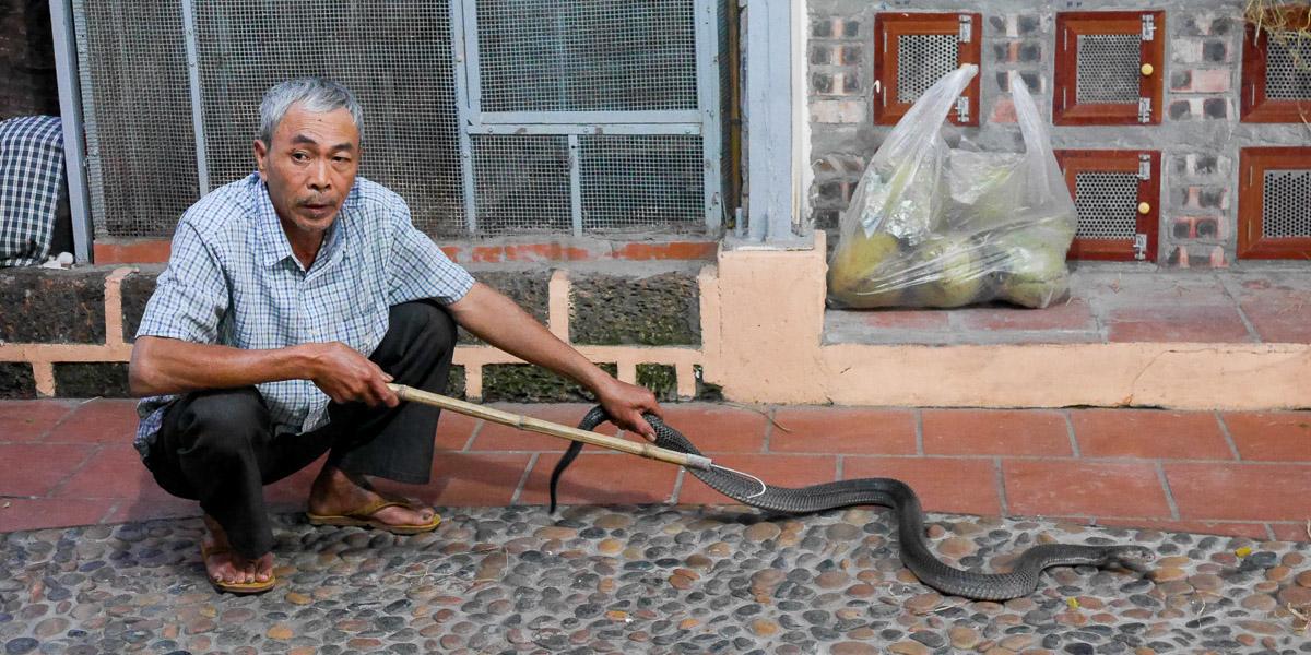 Wąż na talerzu