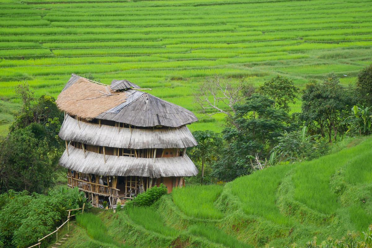 pola ryżowe w Chiang Mai