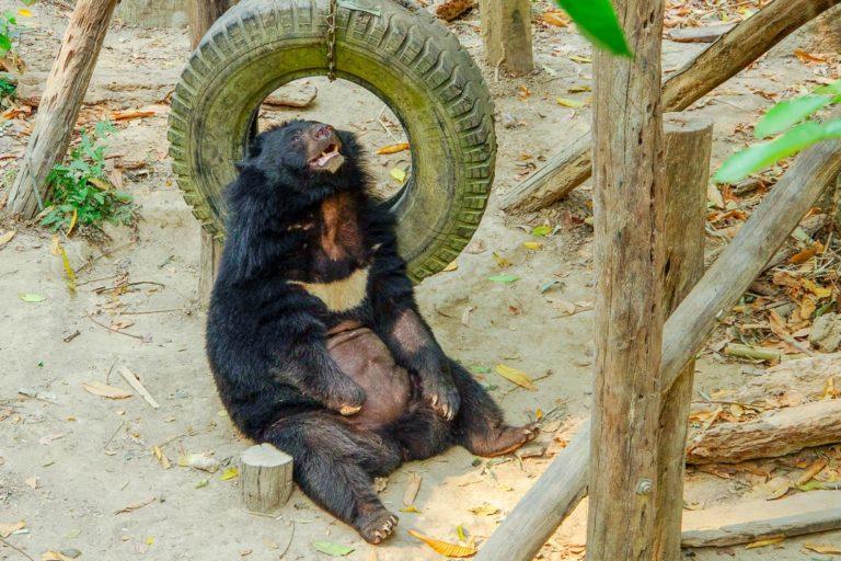 Niedźwiedź w rezerwacie