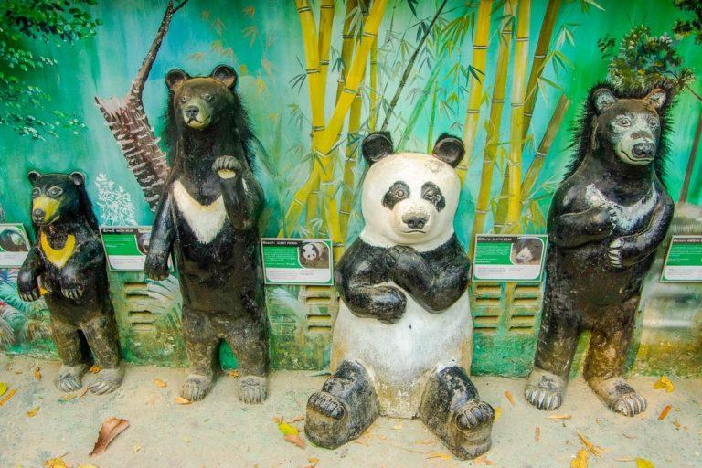 Porównanie niedźwiedzi żyjących na świecie