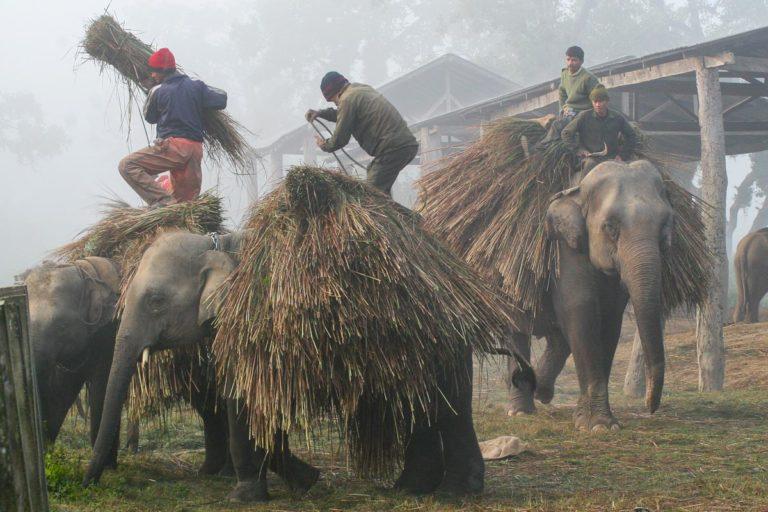 Słonie w Parku Narodowym Chitwan - Nepal