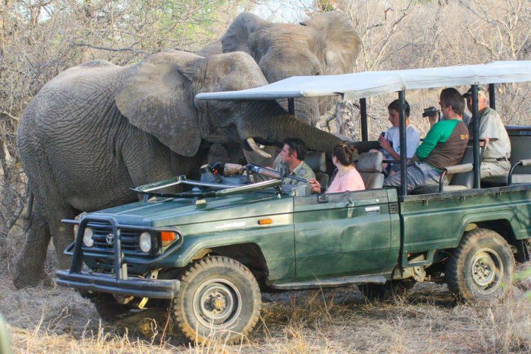 Słonie afrykańskie - RPA