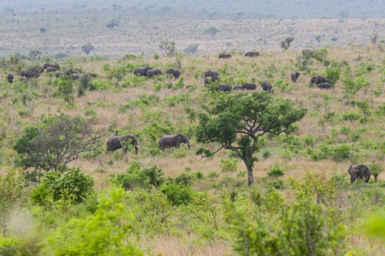 Słonie w Parku Krugera - RPA