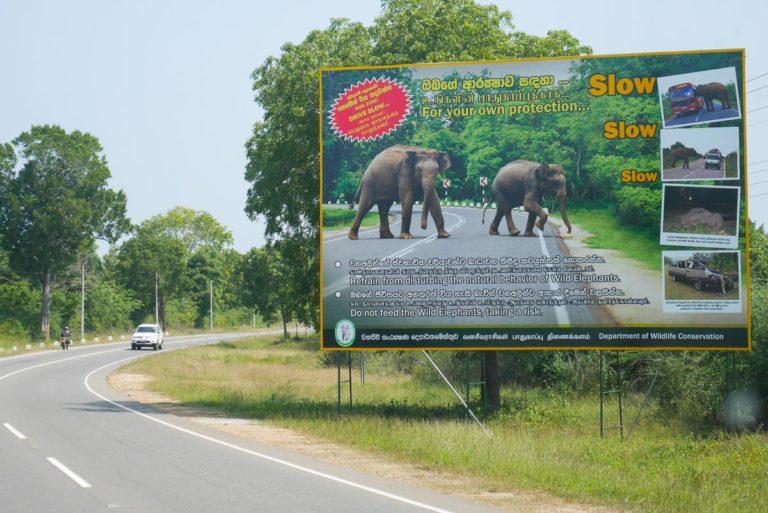 Droga na Sri Lance. Ostrzeżenie przed dzikimi słoniami