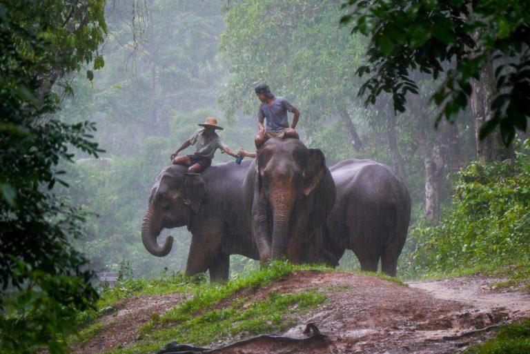 Słonie w pracy - Birma