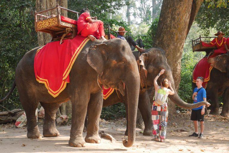 Słonie czekają na turystów w Angkor - Kambodża