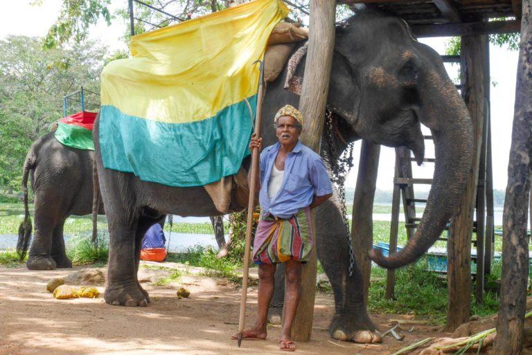 Słoń czeka na turystów - Sri Lanka