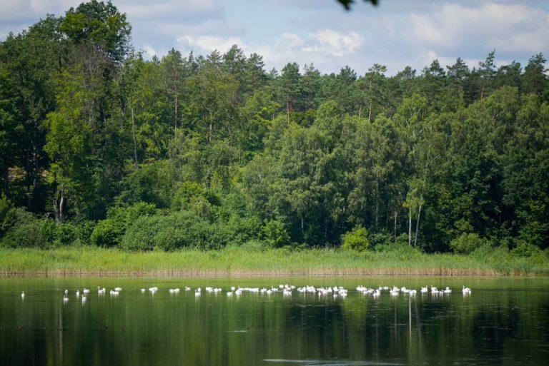 Jezioro w Żydowie