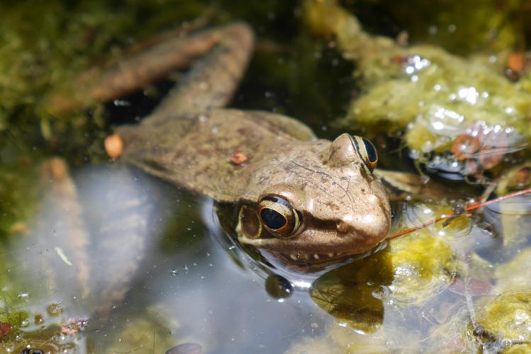 żaba w Górach Marmurowych