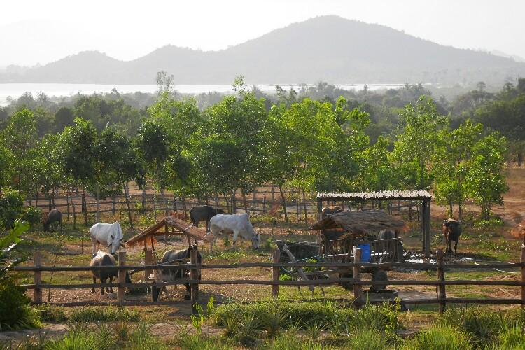 pieprz Kampot w Kambodży