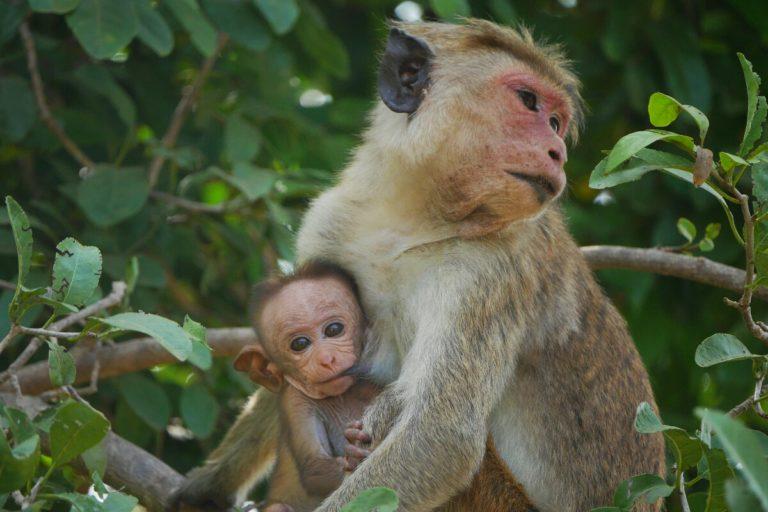 Park Narodowy Udawalawe na Sri Lance