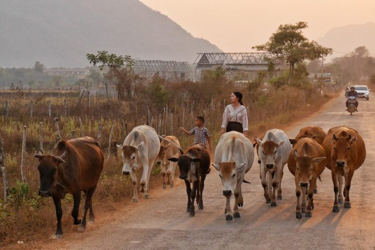 pola wokół Vang Vieng w Laosie