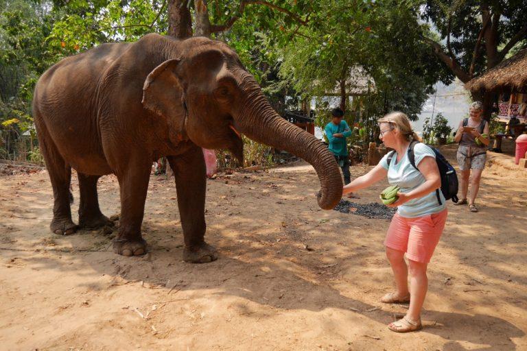 słonie w Whisky Village w Laosie