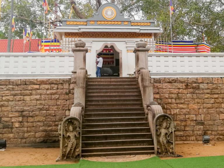 Mura Gala i drzewo bo w Anuradhapura na Sri Lance