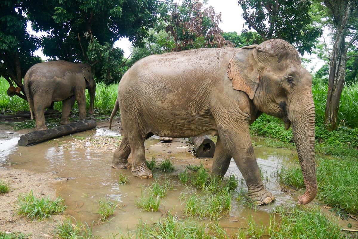 słonie w Chiang Mai