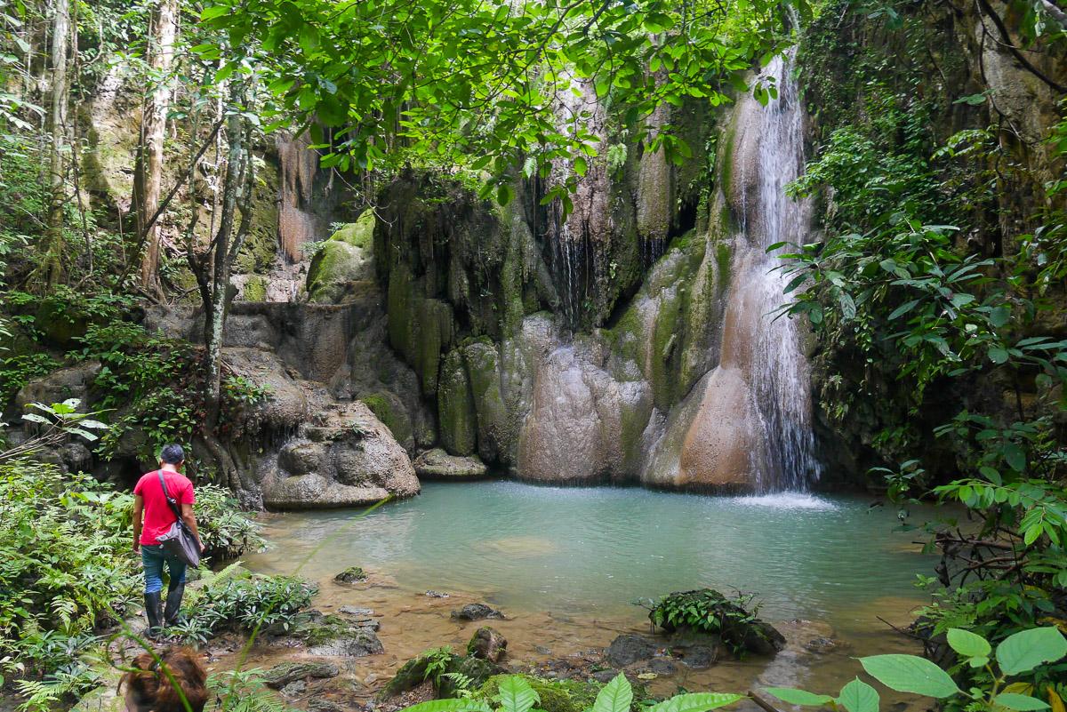 dżungla w Chiang Mai