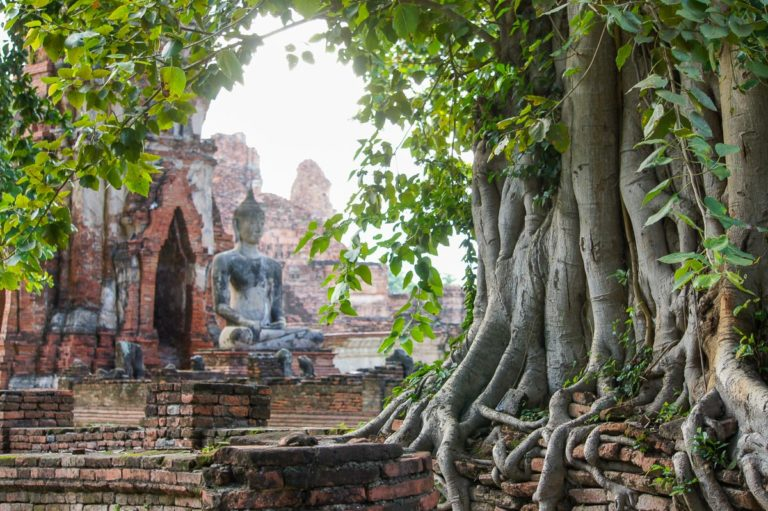 Drzewo Bodhi z Buddą w tle