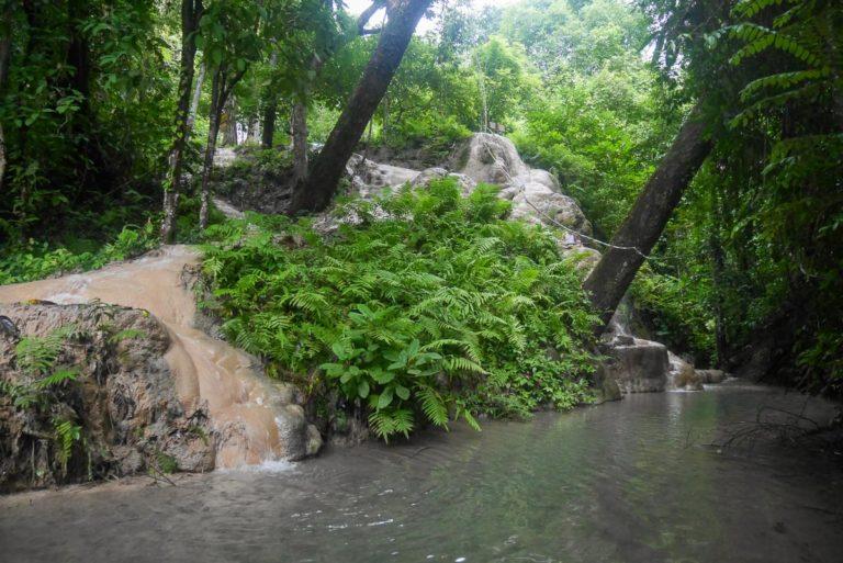 Tajska dżungla