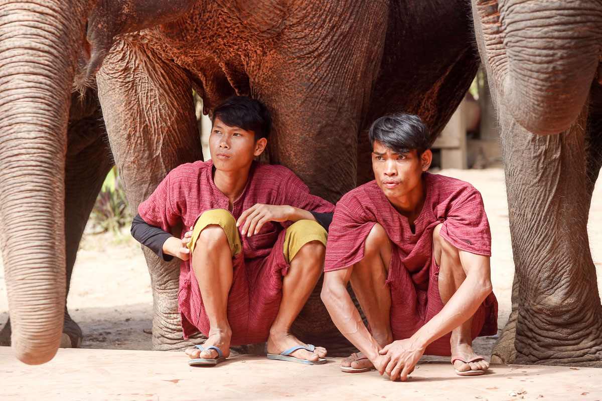 Obóz słoni