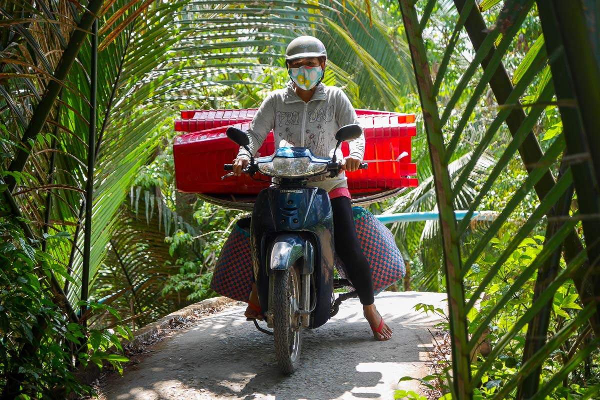 Dżungla w Delcie Mekong