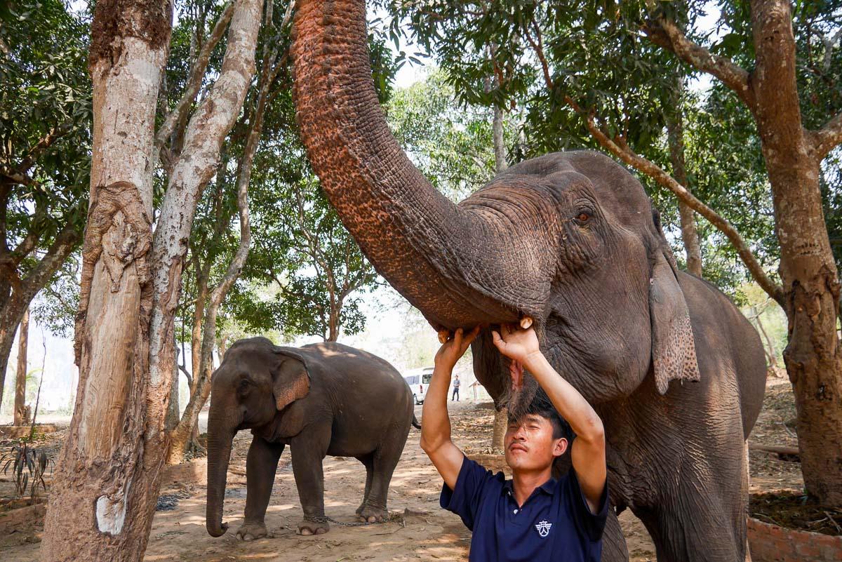 Obóz słoni w Pak Ou