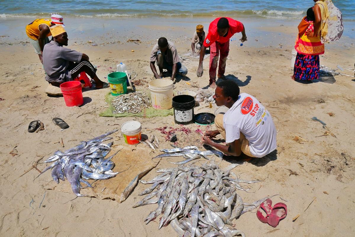 Za pomocą piasku rybacy ściągają rybom skórę