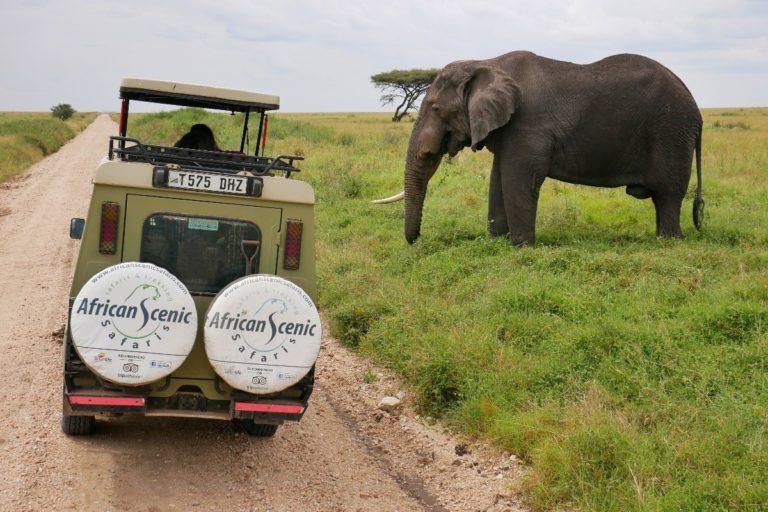 Jedno-kły słoń udaje, że nas nie widzi