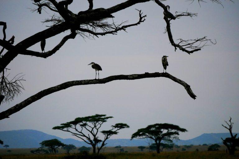 Wieczór w Serengeti