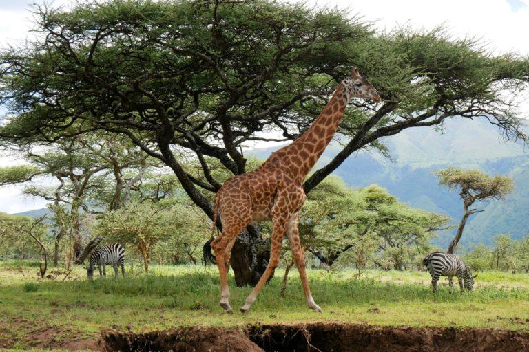 Obszar chroniony Ngorongoro