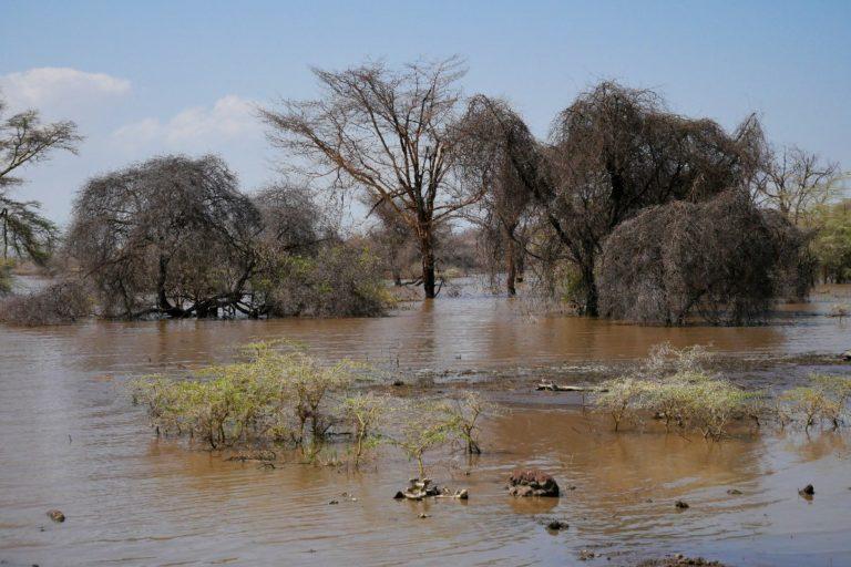 W porze deszczowej jezioro Manyara powiększa się