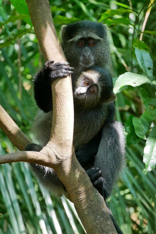 Małpy w Parku Narodowy Manyara
