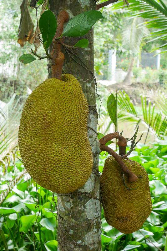 Jack fruit - często spotykany owoc w Delcie Mekong