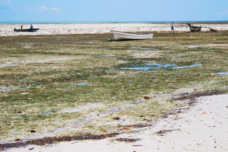 Odpływy odsłaniają podwodną roślinność