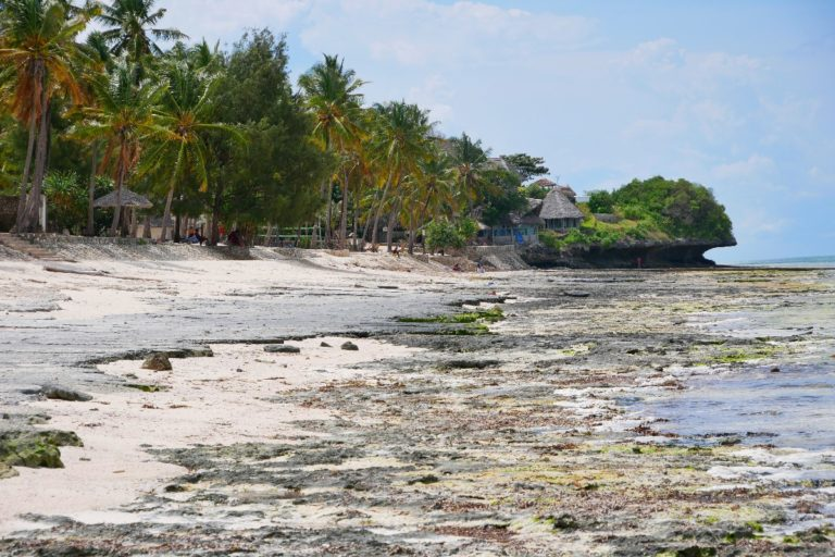 Szeroka plaża Zanzibaru w czasie odpływu