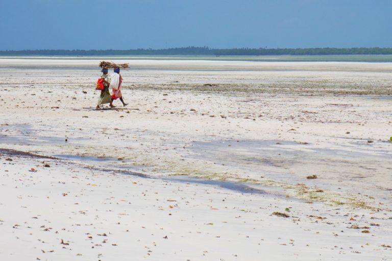W Czasie odpływu kobiety suchą stopą idą na podwodną plantację mwani (alg)