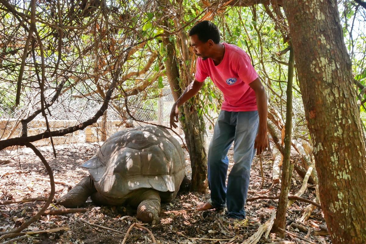 Olbrzymi żółw na wyspie