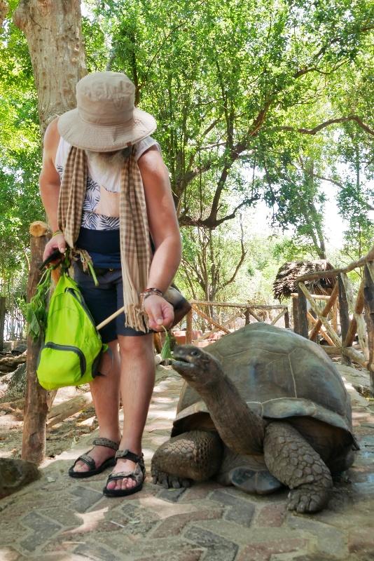 Do opłaty za wstęp na wyspę wliczone jest jedzenie dla żółwi