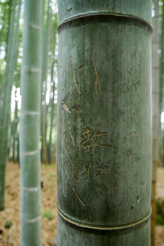 Zagajnik bambusowy Sagano w Arashiyama jest jednym z najczęściej fotografowanych miejsc w Japonii.