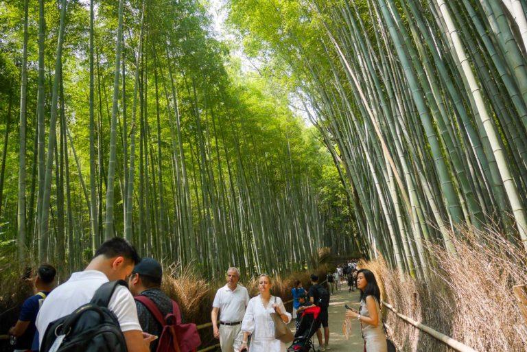 Bambusowy zagajnik w Arashiyamie najlepiej odwiedzać wcześnie rano. Nie ma wtedy tylu turystów.