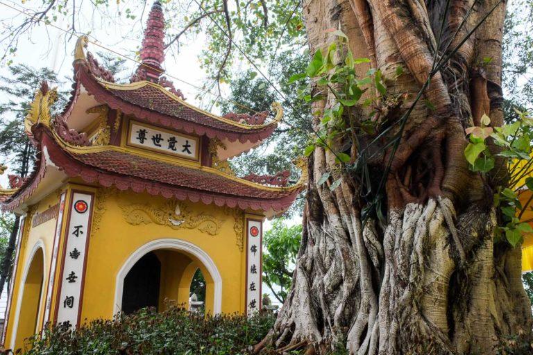 Drzewo Bodhi, którego szczepkę przywiózł prezydent Indii