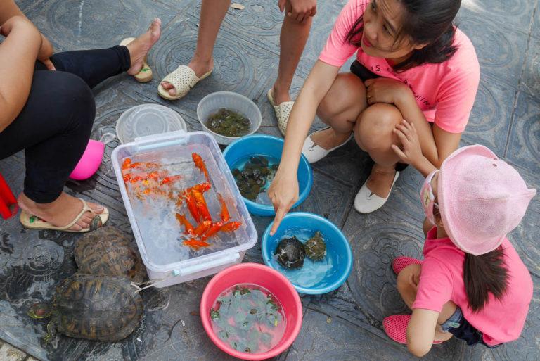 Przed wejściem do świątyni Tran Quoc można kupić żółwia lub rybki by uwolnić je i podarować im życie