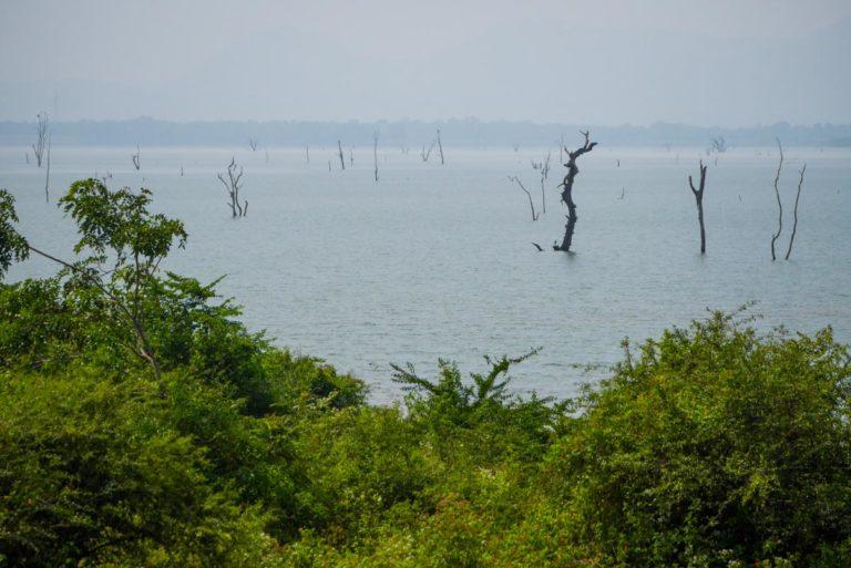 Martwe pnie drzewa są pozostałością lasu rosnącego tu przed budową zbiornika